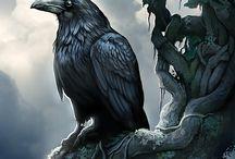Raven & Crows