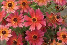 Plants_perennials