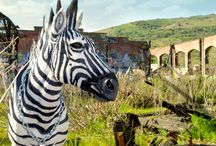 Vicious Zebra / Faux Urban Taxidermy, sculpture, street art, Wild WestSide, Zebra, Punk Rock