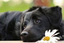 A Dog's Life / by Julie Schoen