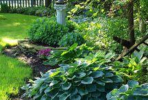 In The Garden...Shade