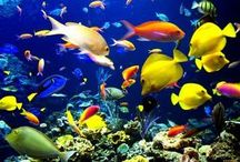 Hobbies: Aquariums  / A collection of aquariums , fish, deco and everything to create an awesome tank.  / by Jill Jill
