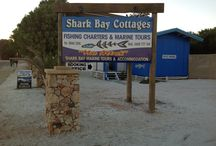 Shark Bay Marine Tours And Accommodation
