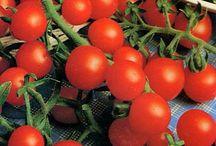 Tomate ecologico / Tomate ecologico de Almeria,100% natural.