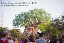 Disney's Animal Kingdom / Disney's Animal Kingdom is the fourth of four theme parks built at the Walt Disney World Resort in Bay Lake, Florida, opened on Earth Day, April 22, 1998.