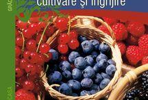 Pomi și arbuști fructiferi