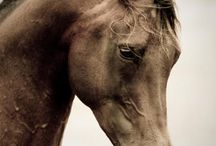horses / by Tricia Ryan