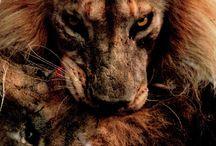 lion references