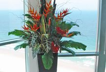 Tropical arrangments