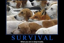 Survival stuffs / by Stephanie Brown