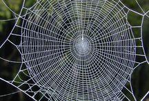 Spider webs proteins - Spider silk