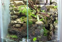Vivarium Ideas to try