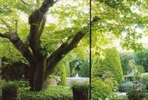 Garden / by Tina Nielsen