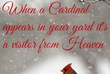 Cardinals...Our Guardian Angels