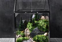 Mini terrarium garden