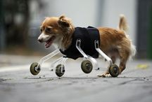 13 Handicapped Animals and Their Inspirational Stories / We receive so much from animals in the form of love and inspiration. We can only hope to give back to them as much as they provide for us. These stories of handicapped animals and the prosthetic devices developed for them is a small attempt.   | www.petnook.in | #petnook