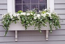 Window Planter Ideas