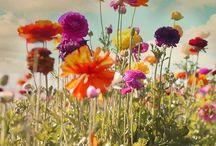 Τοπία με λουλούδια