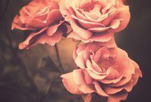 Rêve Floral