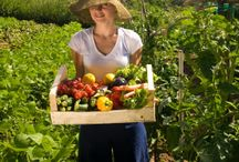 Food & Ag Policy / The world of food and agriculture is growing and changing every day thanks to new research and policy changes. Keep up do date on the latest news with this board.