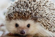 Hedgehogs and lovely stuff
