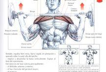 ejercicios para gym