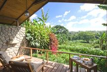 Best Safari Rooms With A View / Best stunning #views from safari rooms and beach properties