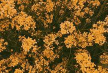 Flores, cores e estações