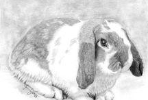 tekening konijn