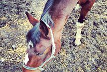 Equitation ❤️