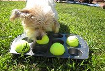 jouet pour chiens