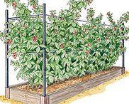 Nyttoväxter