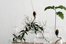 Plantjes en meer
