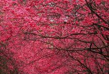 Natures beauty  / by Grace Allen