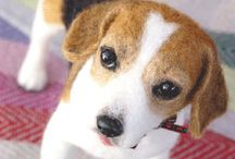 Beagle/Basset