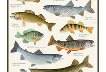 horgászat halak