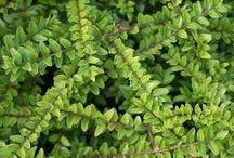 Tuinbeplanting