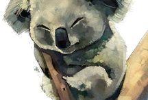 Koala ❤
