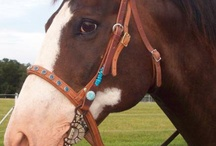 rząd koński / horse tack