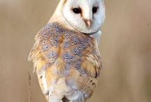 Because owls
