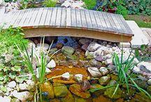 Backyard stream and pond / by Amy Welch