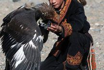 Molgoria  falcory