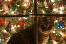 What cats do at Christmas............