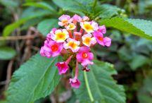My flower / refresing menoreh hill