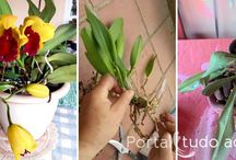Plantas e Jardins