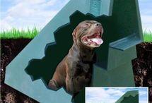 Eco Friendly dog -house