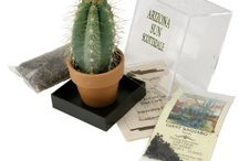 Tucson Souvenirs / by TucsonTopia