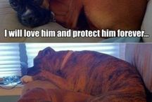 dogs <3♡♥♡☆★☆
