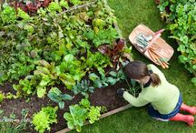 Kitchen Gardening / Pins related to kitchen gardening, keeping chickens, and pest control