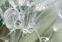 Delicate, mysterious, beautiful / Fog, dew, flower,